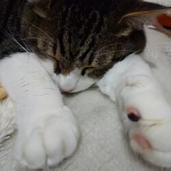 「寝顔」サムネイル2