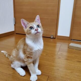 甘えん坊な男の子 ※猫エイズキャリアです