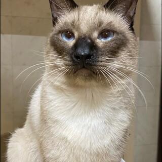 大人猫の魅力たっぷり♪男前のごうくんです!