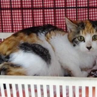 生後4ヶ月 可愛い三毛猫です
