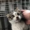 推定生後1〜2ヶ月の小さなオスの仔猫ちゃん