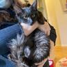 長毛の黒猫ちゃん 女の子