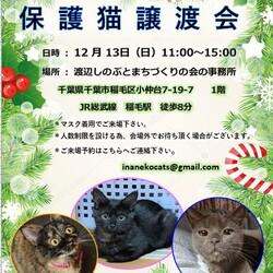 稲ねこ 保護猫譲渡会 12月13日(日)開催です!!