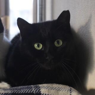 大人しい黒猫の男の子
