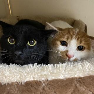 仲の良い2匹の猫ちゃんです。