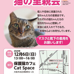 「みやちか猫の里親会について」サムネイル1