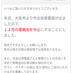 「12/13おおさかねこネット里親会中止です!」サムネイル2