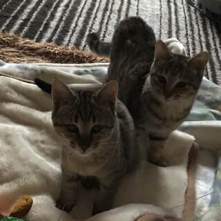 生後約半年の姉妹仔猫