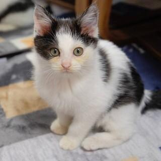 かわいい子猫のモォーくん