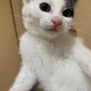 【小平市】ビビリな美人!2ヶ月の粉雪ちゃん