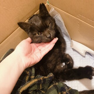 【急募】甘えん坊な黒猫の女の子♡要介護