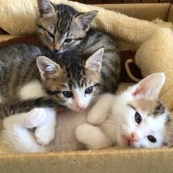 保護子猫3匹が皆トライアルに出発しました❣️