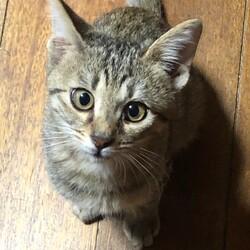 三重県桑名市12月13日(日)第110回リトルパウエイド猫の譲渡会
