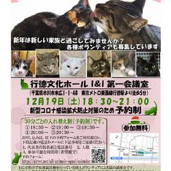 12/19(土曜)イコール保護猫譲渡会(予約制)