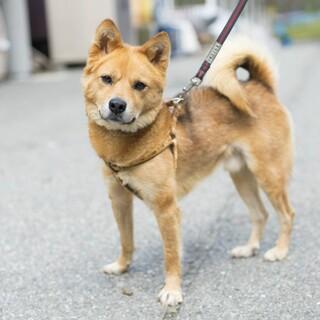 犬より人が好き♪お散歩も大好き【トリッピアー】くん