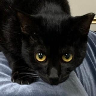11ヶ月 黒猫 人慣れしてます ちまきちゃん