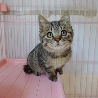 募集停止超の付く甘えん坊子猫 コロコロです