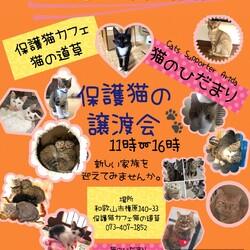 猫の道草&猫のひだまり保護猫の譲渡会