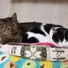 「元気いっぱい若猫とんとん!」 サムネイル3