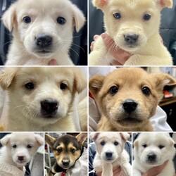 緊急:仔犬&仔猫の譲渡会in滋賀(大阪➡滋賀)