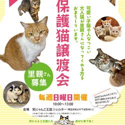 保護猫譲渡会(毎週日曜日開催)