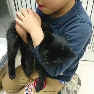 かわいい癒し系黒猫兄妹
