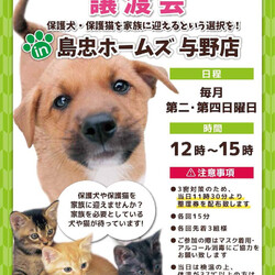 ネコちゃん譲渡会 in 島忠ホームズ与野店