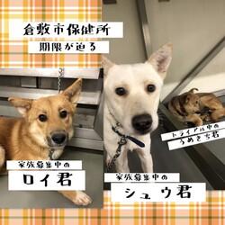 最終お問い合わせ期限12/23→全頭譲渡決定!