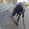 おっとりシニア犬最高!アメコカのペパーミント君! サムネイル3