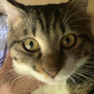 人懐っこい可愛い兄妹猫 不妊手術済み