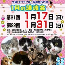 猫の譲渡会 in 名古屋市瑞穂区生涯学習センター