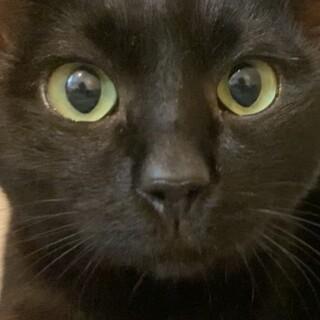 のんびりマイペース甘えん坊な黒猫くん♪