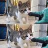 食べ盛り遊び盛りの野良子猫くん。 サムネイル3