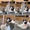 食べ盛り遊び盛りの野良子猫くん。 サムネイル4