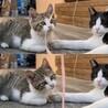 食べ盛り遊び盛りの野良子猫くん。 サムネイル6