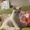 美猫!!1匹飼いで(経験者さん求む) サムネイル4