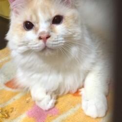 猫の譲渡会 IN碧南市 サムネイル2