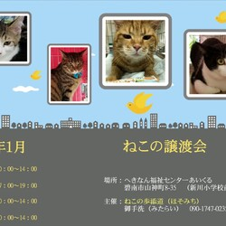 猫の譲渡会 IN碧南市