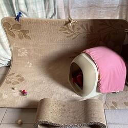 猫トイレのふた