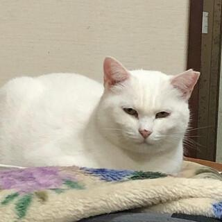 いつもこの顔です(笑)白猫なつき