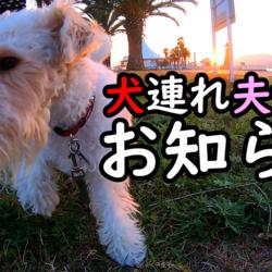 犬連れ夫婦旅からのお知らせ