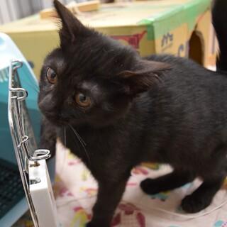 元気キッズ、黒猫のスーくん!