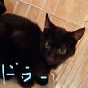 黒仔猫 お目目クリクリ兄妹 サムネイル6