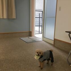 保護犬に会いにきてね♡ご縁探し会♡ サムネイル3