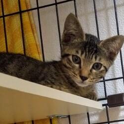 保護猫クロスケの部屋さんとふぐぶりさん。