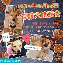 保護犬譲渡会☆倉敷