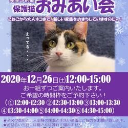 保護猫さんのお見合い会♪inハッピータビークリニック
