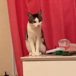 猫2匹を預かってくださる方