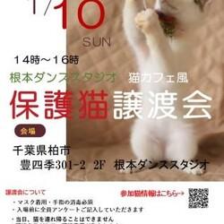 1/10(日)根本ダンススタジオ保護猫譲渡会