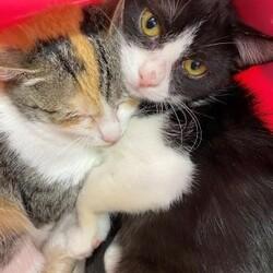 1/10(日)根本ダンススタジオ保護猫譲渡会 サムネイル2